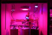 Led grow light Светодиодные светильники для растений
