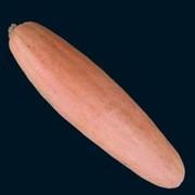 Семена американской тыквы Большой Розовый Банан (5 шт.)