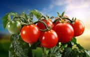 Семена овощей на любой вкус