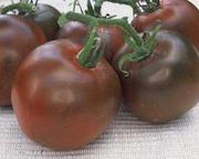 Продам профессиональные семена цветов и овощей,  семена сидератов.