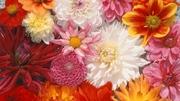 предлагаем оптом семена цветов весовые,  пакетированные.