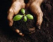 Растительный грунт с доставкой