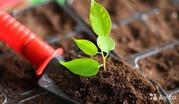 Компания «БиоГрунт» занимается оптовой продажей растительных удобрений